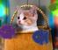 Giúp mèo con tìm đồ chơi